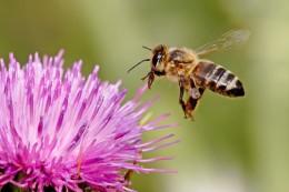 Как избежать укусов пчел: 8 советов