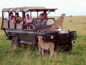 Кения - туризм, фото, настоящий открытый зоопарк